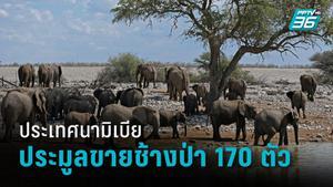 นามิเบียประมูลขายช้างป่า 170 ตัว ชี้ประชากรช้างป่าที่เพิ่มขึ้นคุกคามประชาชน