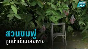 สวนชมพู่ 10 ไร่ ในอ.พุนพิน ถูกน้ำท่วมเสียหายหลักแสน