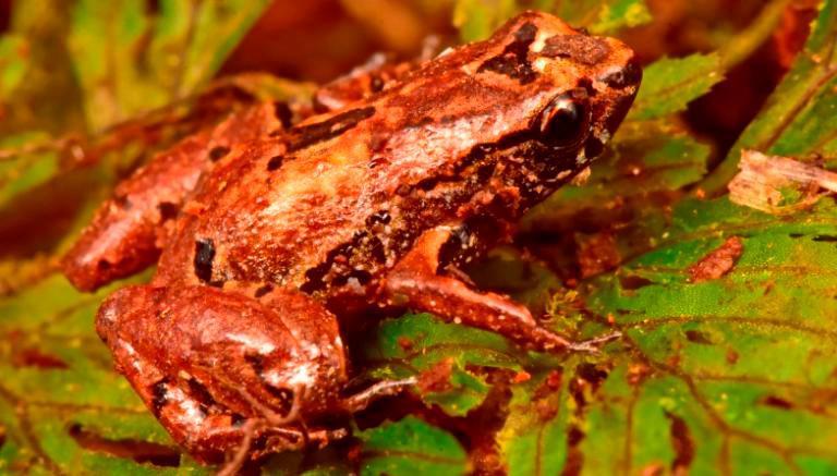 พบสิ่งมีชีวิตชนิดใหม่กว่า 20 สายพันธุ์ในโบลิเวีย