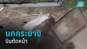 นกกระยางบินตัดหน้า กระบะชนมอไซค์ดับ 1