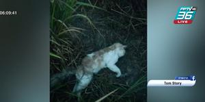 กระหน่ำตีแมวเปอร์เซีย ก่อนโยนทิ้งริมรั้ว