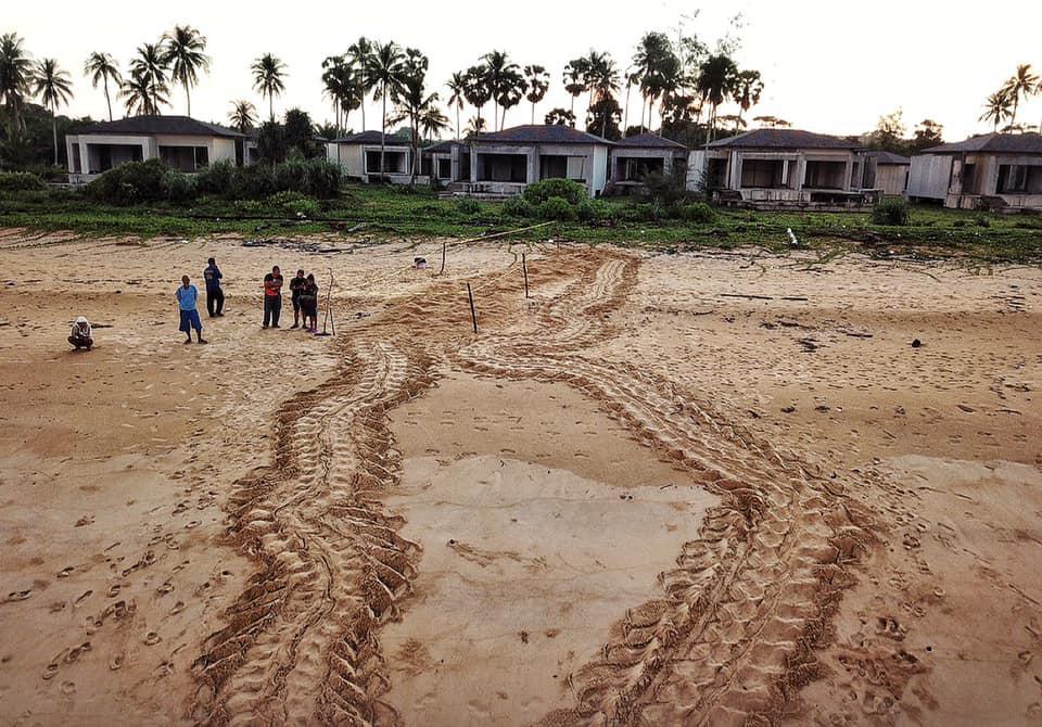 สุดปัง! รอยแม่เต่ามะเฟืองยักษ์ ขึ้นวางไข่หาดบางขวัญ รังที่ 12  ลุ้นทำลายสถิติ