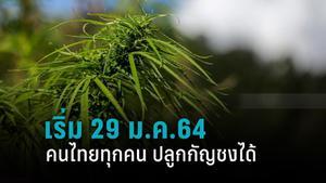 คนไทยทุกคน ปลูกกัญชงได้ เริ่ม 29 ม.ค.64