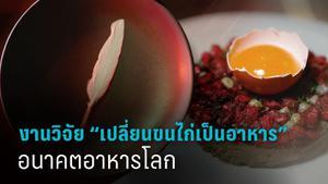 """พูดคุยกับนักวิจัยไทยผู้ """"เปลี่ยนขนไก่เป็นอาหาร"""" อนาคตอาหารโลก"""
