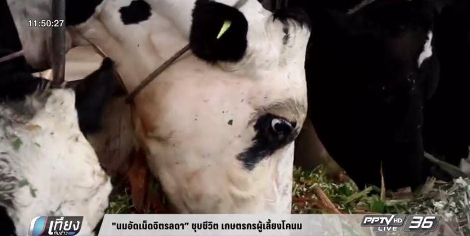 """""""นมอัดเม็ดจิตรลดา"""" ชุบชีวิต เกษตรกรผู้เลี้ยงโคนม (คลิป)"""