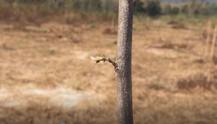 """ป่าไม้ รุดสอบพื้นที่ปลูกป่า """"ลุงป้อม-ฌอน"""" ยัน ต้นไม้ยังไม่ตายแค่ผลัดใบช่วงหน้าแล้ง"""