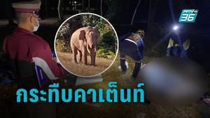 กระทืบคาเต็นท์! ช้างป่าเขาใหญ่บุกหาอาหาร นักท่องเที่ยวดับ 1 สั่งปิดจุดกางเต็นท์