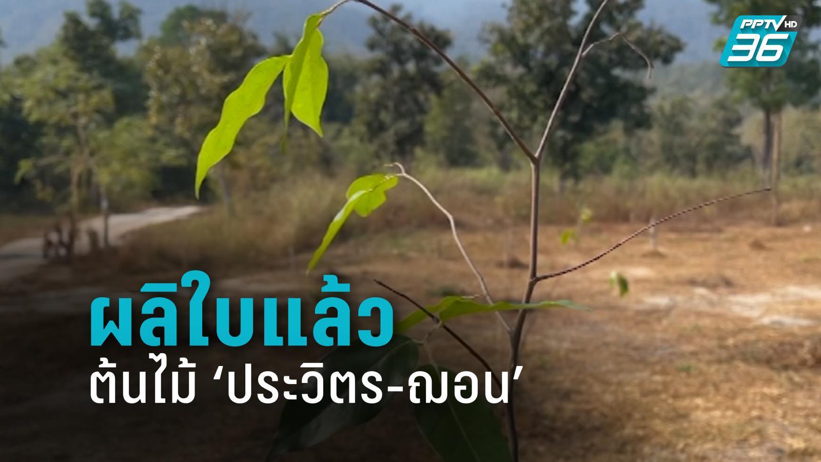 """ผลิใบแล้ว ต้นไม้  """"ประวิตร-ฌอน"""" กรมป่าไม้นำรถน้ำฉีดทุกวัน พร้อมแจงงบ 23 ล้าน"""