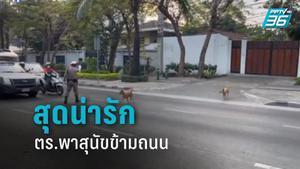 สุดน่ารัก! ชาวเน็ตชื่นชม ตร.โบกหยุดรถ พา 2 สุนัขข้ามถนน