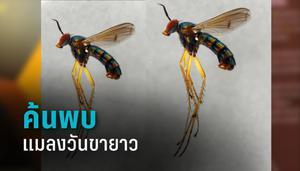 """ม.อ. ค้นพบ """"แมลงวันขายาว""""สิ่งมีชีวิตชนิดใหม่ของโลก"""