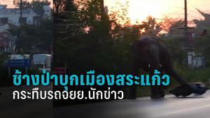 ช้างป่าบุกเมืองสระแก้ว กระทืบรถจยย.นักข่าวพังเสียหาย เตือนชาวบ้านระมัดระวัง