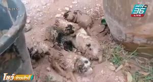 กู้ภัย ช่วยลูกสุนัข 6 ตัว ติดอยู่ในท่อ