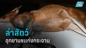 ชายปริศนา ล่าสัตว์ในอุทยานฯแก่งกระจาน ทิ้งซากเก้ง-ปืน วิ่งหนี
