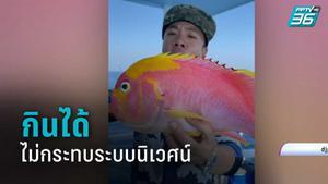 """นักวิชาการ ยัน """"ปลาพิกกี้"""" กินได้  ไม่กระทบระบบนิเวศน์ หลังทัวร์ลง """"ดีเจภูมิ"""""""
