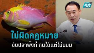 ไม่ผิดกฎหมาย !! จับปลาพิ้งกี้ ยัน กินได้แต่ไม่นิยม