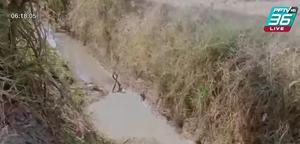 จนท.ดับเพลิงตะลึง พบงูสิงผสมพันธุ์กลางร่องสวนมะพร้าว