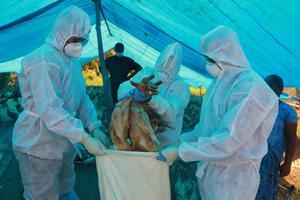 พบผู้ติดเชื้อไข้หวัดนก H5N8 ครั้งแรกของโลก