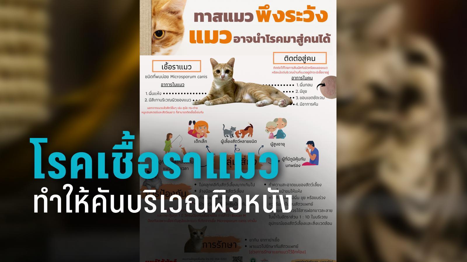 ทาสแมวพึงระวัง! แพทย์ผิวหนัง เตือนแมวอาจนำโรคมาสู่คน