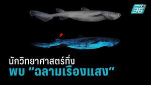 """พบฉลามแถบนิวซีแลนด์ 3 สายพันธุ์ """"เรืองแสงได้"""""""