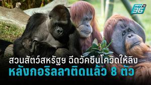 สวนสัตว์สหรัฐฯ ฉีดวัคซีนโควิด-19 ให้ลิง 9 ตัว