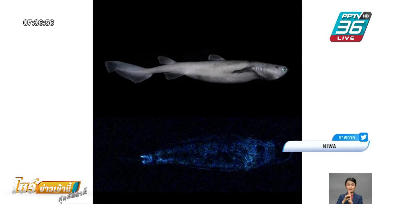 นักวิทย์ถ่ายภาพฉลามเรืองแสงได้เป็นครั้งแรก