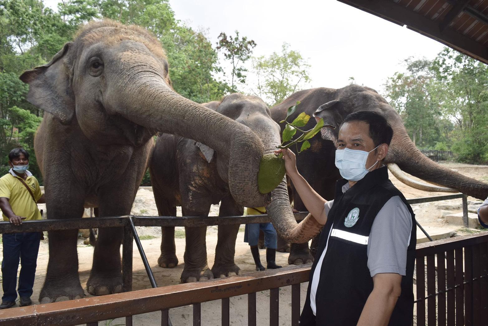 มอบเค้กผลไม้ยักษ์ ฉลองวันช้างไทย