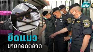 """ป.ป.ส. บุกจับ """"กุ๊ก ระยอง"""" คดียาเสพติด ยึดทรัพย์ 35 ล้าน พร้อมแมว 6 ตัว"""