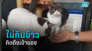 แมวของกลาง ซึม-ไม่กินข้าว-คิดถึงเจ้าของ