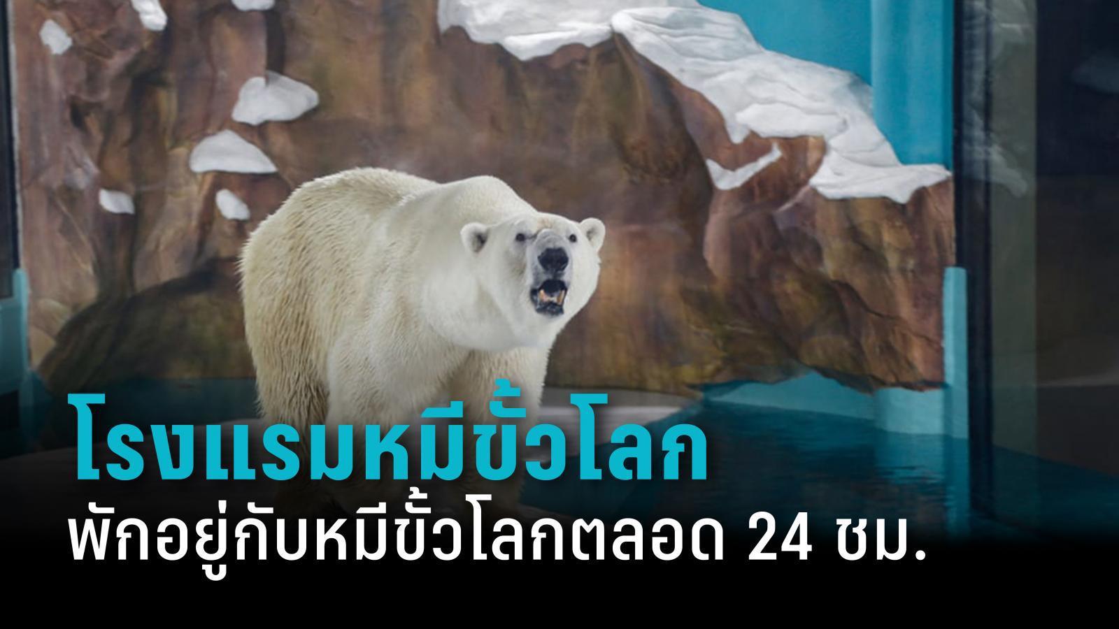 ทัวร์ลงโรงแรมจีน นำหมีขั้วโลกเป็น ๆ โชว์กลางโรงแรม 24 ชั่วโมง