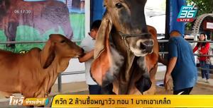 ควัก 2 ล้าน ซื้อพญาวัวในตำนาน หูยาว อวัยวะเพศ ทั้ง 2 ข้างเท่ากัน