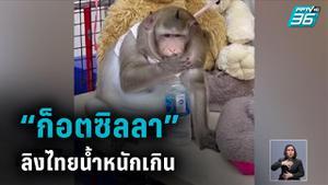 """สื่อนอกตีข่าว """"ก็อตซิลลา"""" ลิงไทยหนักกว่า 20 กิโลฯ"""