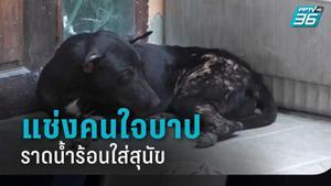 สาวโพสต์แช่งคนใจบาป ราดน้ำร้อนใส่สุนัข คาดชอบวิ่งไล่กัด-ขับถ่ายหน้าบ้าน