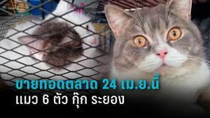 ขายทอดตลาด แมว 6 ตัว กุ๊ก ระยอง 24 เม.ย.นี้ ป.ป.ส.ยืนยันทำตามกฎหมาย