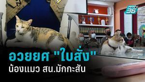 """ส่อง """"เจ้าใบสั่ง"""" แมวประจำ สน.มักกะสัน  รู้ไหมผมยศอะไร ?"""