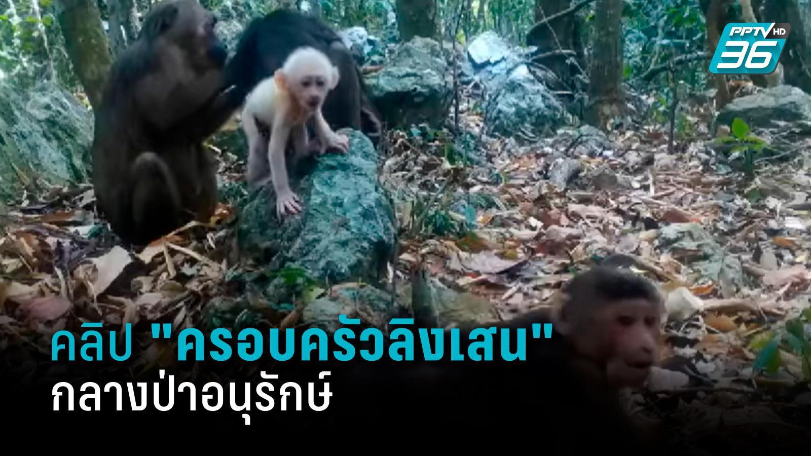 """ภาพ """"ครอบครัวลิงเสน"""" ผ่านกล้องดักถ่าย ในพื้นที่ป่าอนุรักษ์ของไทย"""