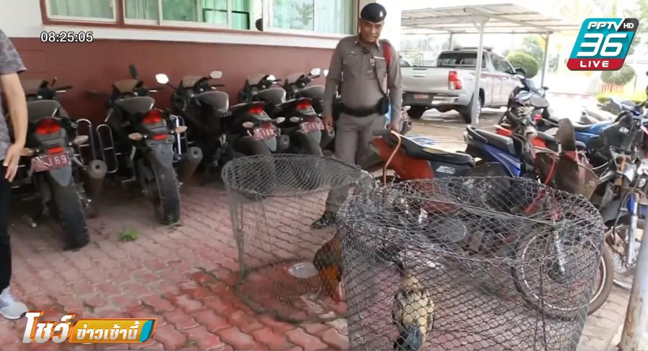 บุกจับบ่อนชนไก่ นักพนันแตกกระเจิง
