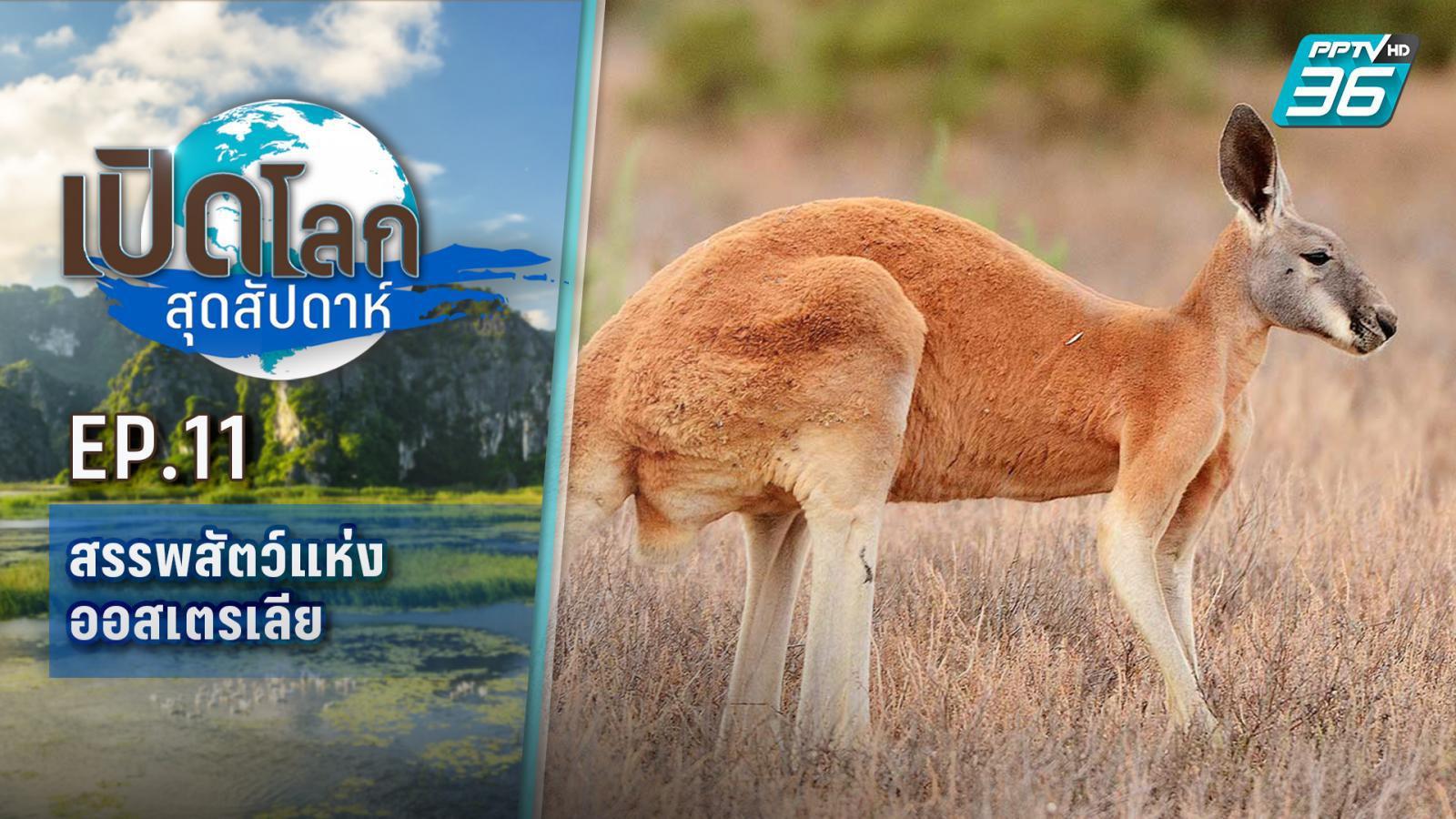 เปิดโลกสุดสัปดาห์ ตอน สรรพสัตว์แห่งออสเตรเลีย | 10 เม.ย.64