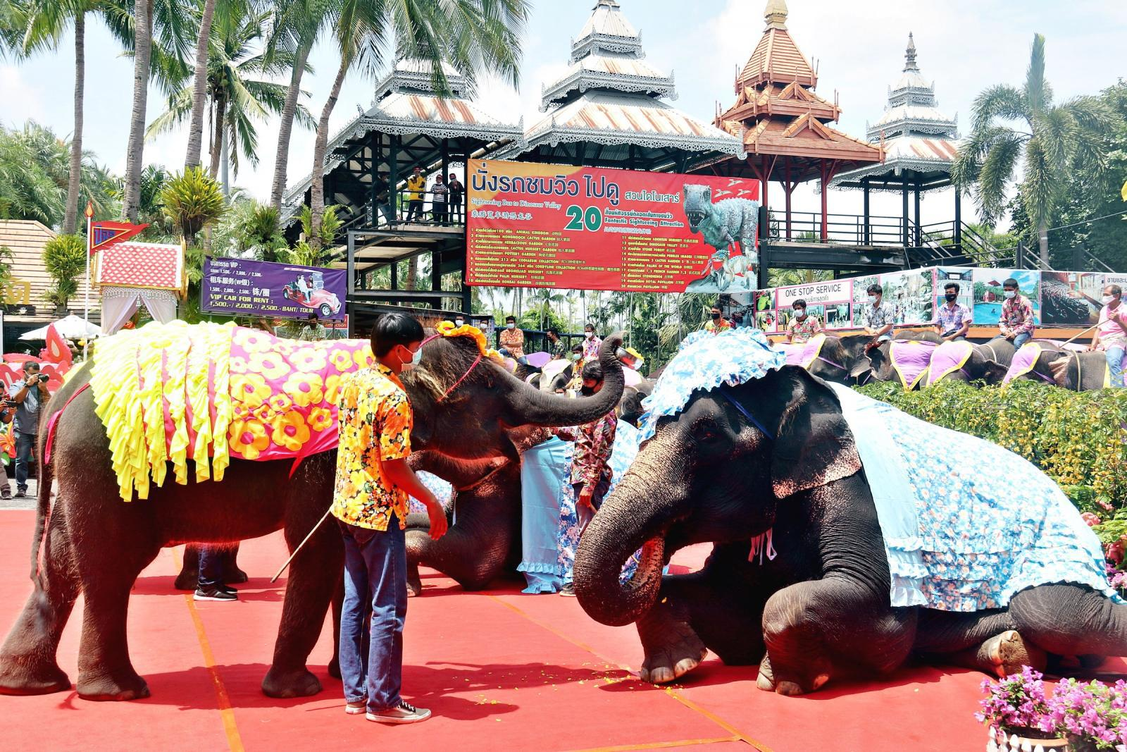 เทศกาลสงกรานต์สวนนงนุช น้องช้าง 3 คู่รดน้ำดำหัวแม่ช้าง