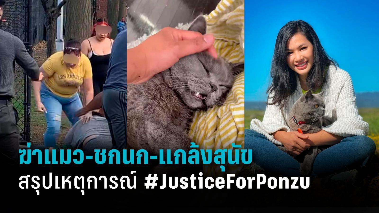 ฆ่าแมว-ชกนก-แกล้งสุนัข สรุปเหตุการณ์ #JusticeForPonzu
