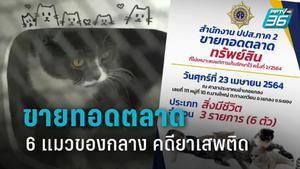 ป.ป.ส. เตรียมขายทอดตลาด แมว 6 ตัว พันธุ์เบงกอล-สก๊อตติช  ของกลางคดียาเสพติด