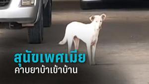 เจ้าสีนิล สุนัขเพศเมียคาบยาบ้า 2 พันเม็ดเข้าบ้าน เจ้าของผงะ! รีบแจ้งตำรวจ