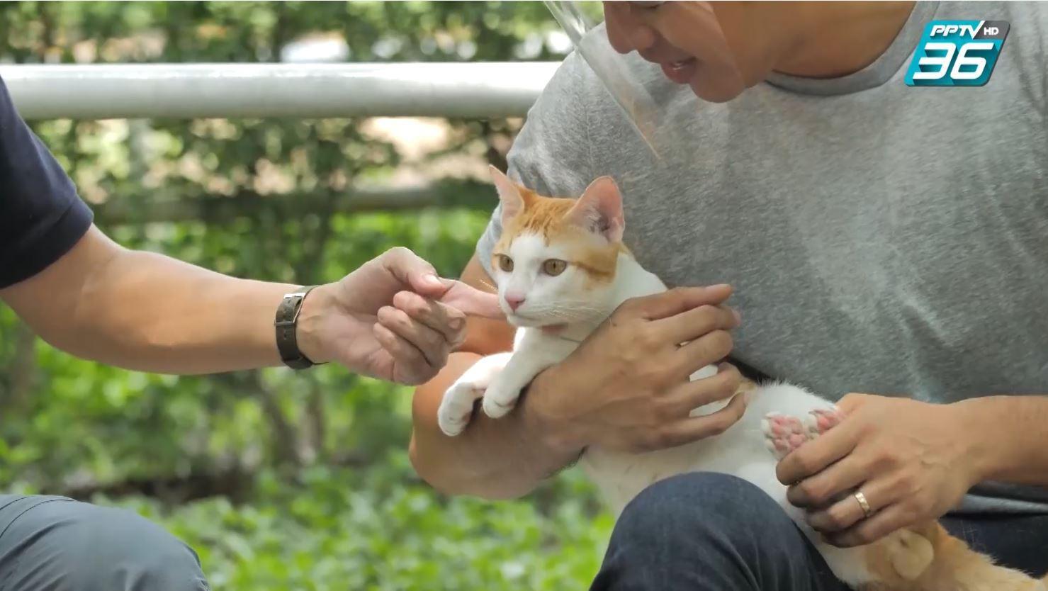 โย่ง อาร์มแชร์ | ตามสัญญา EP.78 | น้องส้มหยุดและทาสแมวตัวสูง