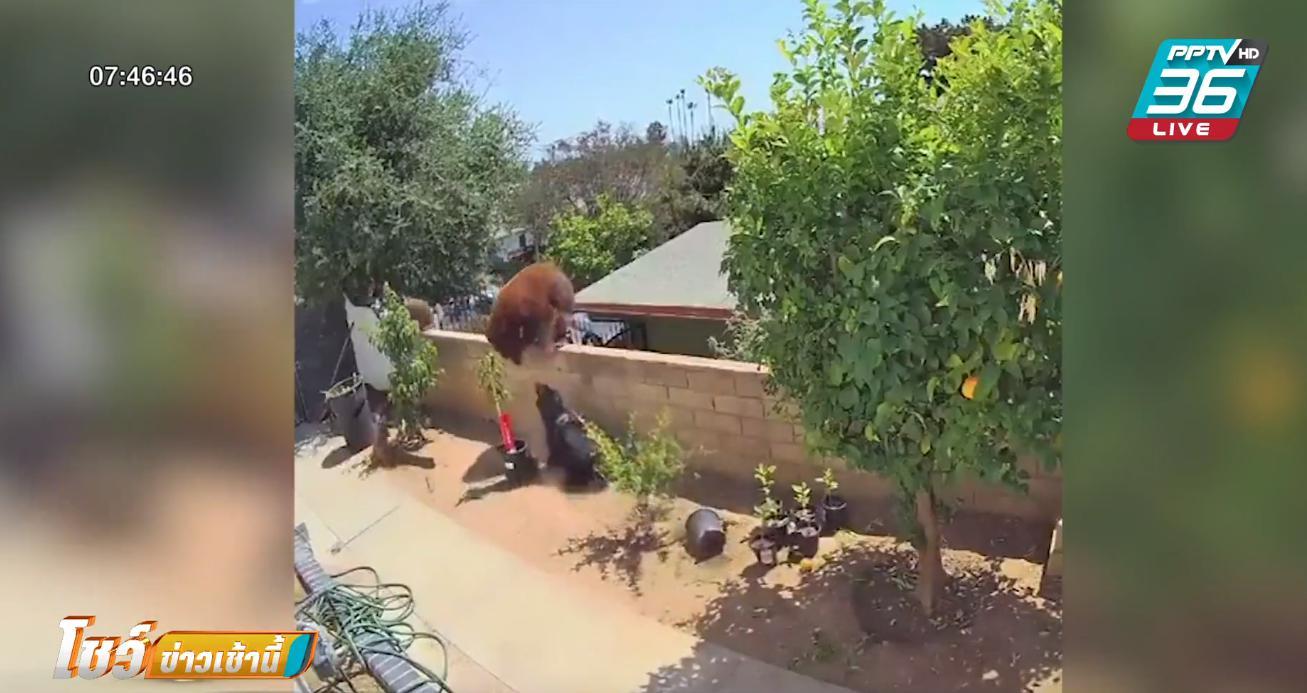 สาวแคลิฟอร์เนีย สู้หมีด้วยมือเปล่าช่วยสุนัข