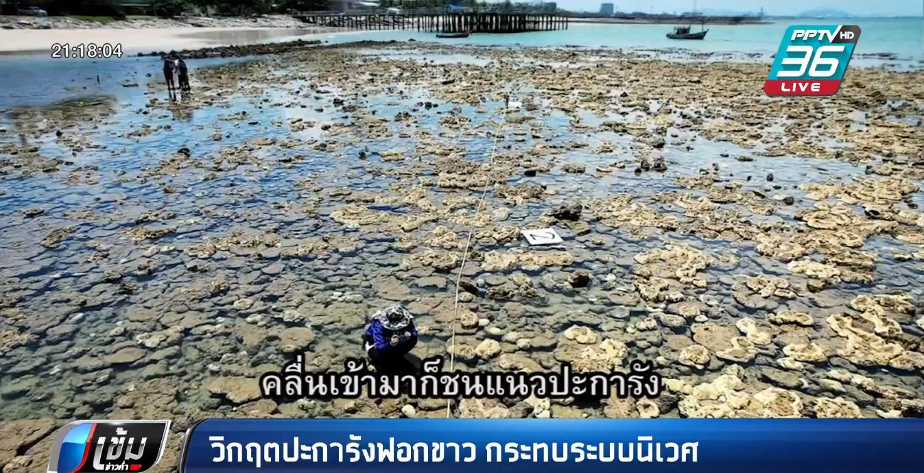 วิกฤต ปะการังฟอกขาว ระบบนิเวศพัง ชาวประมงเดือดร้อน