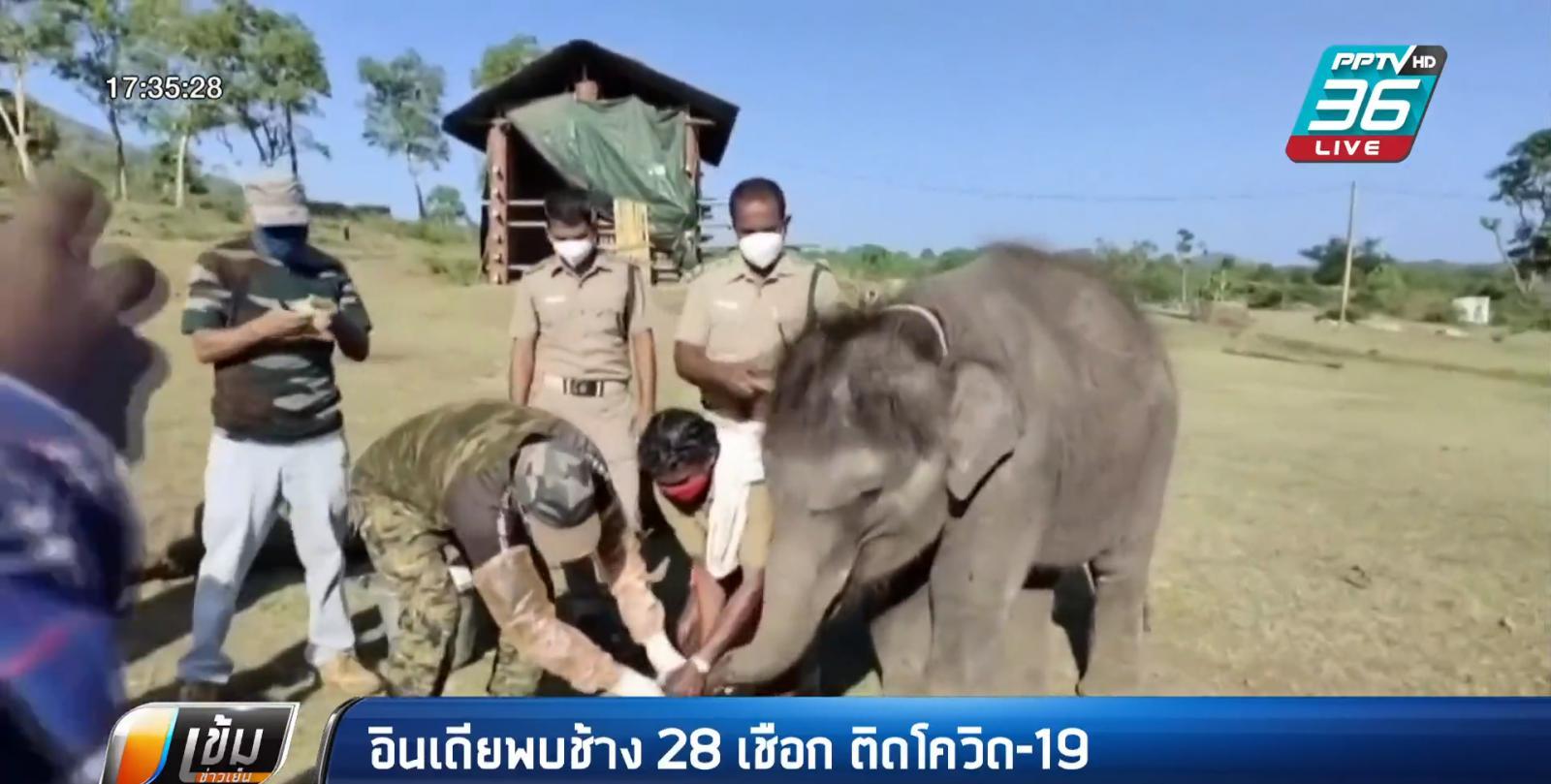 อินเดีย พบช้าง 28 เชือก ติดโควิด-19