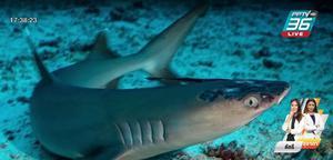 ฉลามปะการัง ในมาเลเซียเป็นโรคผิวหนังปริศนา