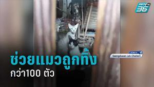 จนท.ช่วยแมวถูกทิ้งในซอย กว่า100 ตัว
