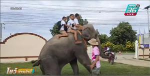 3 นักเรียนเมืองสุรินทร์ ขี่ช้างมาโรงเรียน