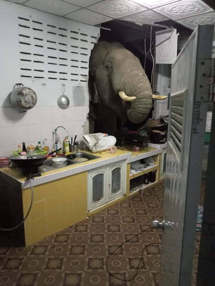 ช้างป่าบุกพังครัวชาวบ้าน คาดได้กลิ่นอาหารต้องการแร่ธาตุจากความเค็ม