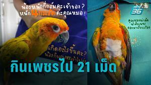 สงสารน้อง !! นกซันคอนัวร์ กินเพชร 21 เม็ด หมอผ่าตัดปลอดภัย